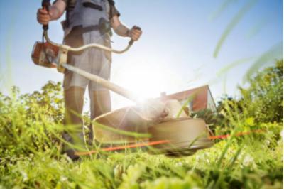 Bosmaaier kopen: onze tips