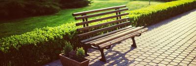 6 tips voor het snoeien van je heg